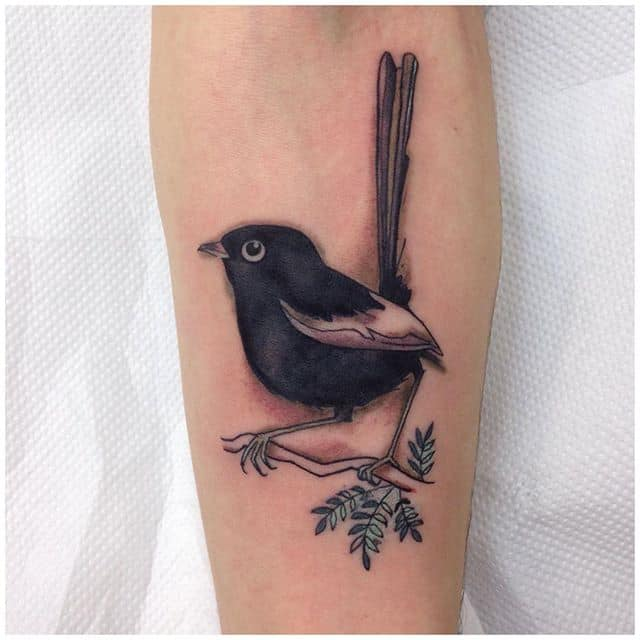 An Australian Willie Wagtail, (adapted from illustration brought in by client.)Thank you Connor! :)